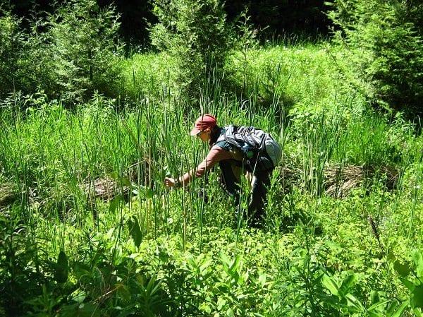 Guelph field work